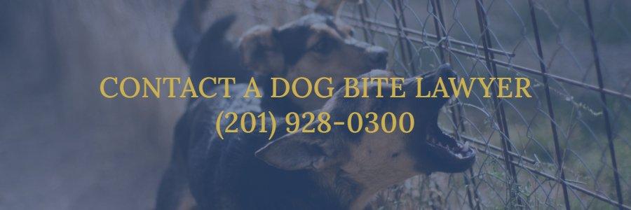 Hackensack dog bite lawyer